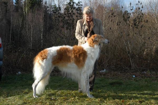 Borzoi - Loài chó cảnh thanh nhã của quí tộc nga