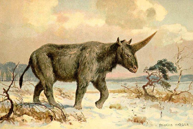 Các nhà nghiên cứu vẽ minh họa về loài kỳ lân ở đời thực.