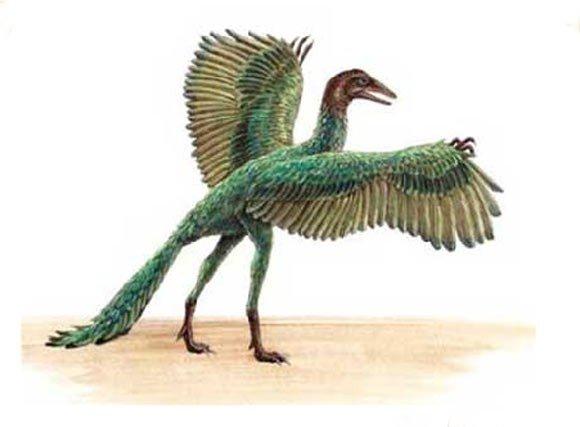 Con Archaeopteryx - tổ tiên của loài chim ngày nay.