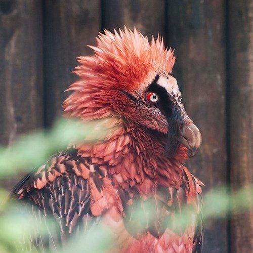 Những loài chim nguy hiểm nhất hành tinh