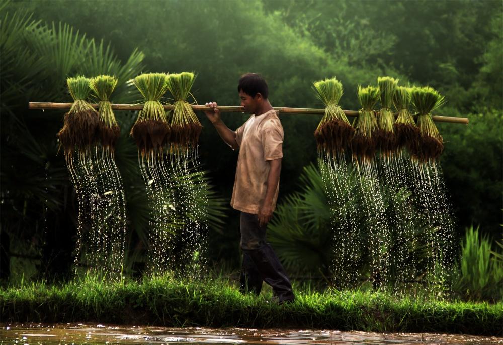 Người nông dân Việt Nam.