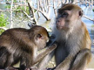 Khỉ biết đổi dịch vụ lấy tình