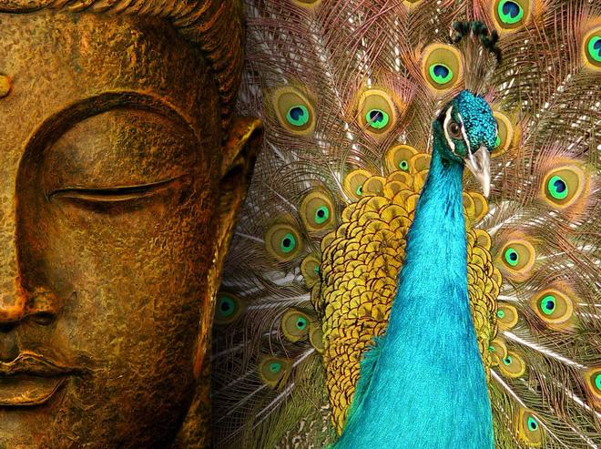Bạn biết gì về Khổng Tước, loài chim Phật Mẫu cao quý? - Ảnh 5.