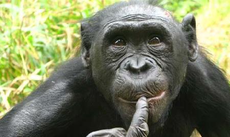 """Khỉ bonono cũng la hét khi """"yêu"""""""