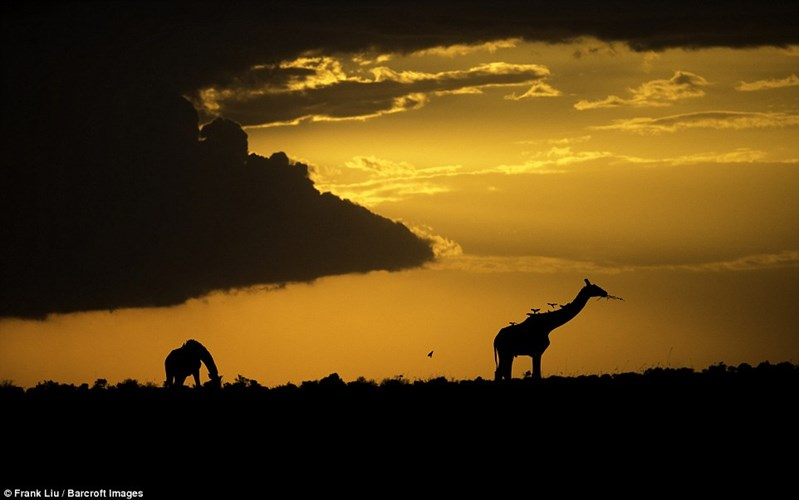 Man nhan voi bo anh dong vat hoang da o Kenya-Hinh-7