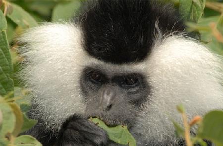 Những loài khỉ có bộ mặt ngộ nghĩnh nhất