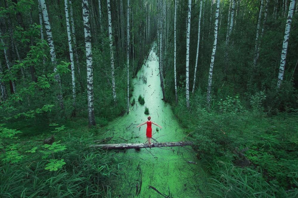 Những cánh rừng bạt ngàn, Nga.